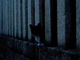 [地域猫その3]