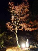 [永源寺紅葉ライトアップ3]