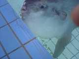 [Sunfish]