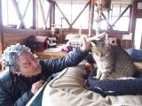 Ayabe_cat